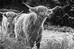 morlock_highlander_summer