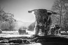 morlock_highlander_winter